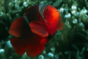 ritual peixinhos vermelhos