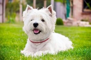 Sonhar Com Cachorro: O Que Significa? Significado Dos