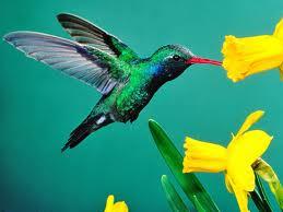 sonhar com colibri